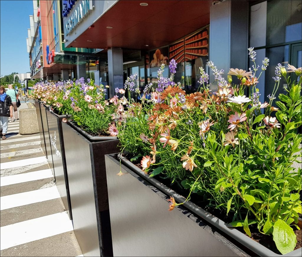 HORTUS-MAGICUS-aplinkos-sutvarkymas-lauko-kavinėje.-Summer-plants--