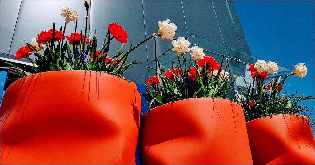 HORTUS-MAGICUS-Svogūniniai-augalai-Verslo-centras-.Bulb-plants.