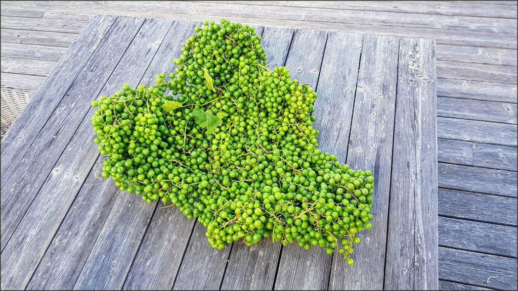 HORTUS-MAGICUS-baigiamieji-akcentai.-Vynuogių-dubuo-modernioje-aplinkoje----MUHU-saloje