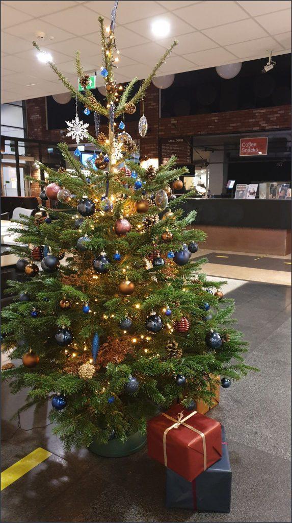 HORTUS-MAGICUS ir ANT NOSIES Kalėdinė-.Eglė-2,2-m.-Cristmas-tree-