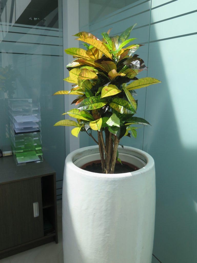 HORTUS MAGICUS. Fiitodizaino paslaugos. Vazoniniai augalai biure.