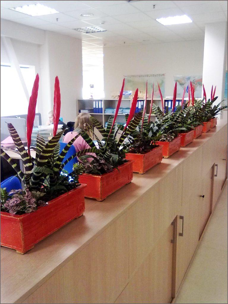 HORTUS-MAGICUS-fitodizaino-sprendimai-vazonai-pagal-specialų-užsakymą.-Poted-plants-