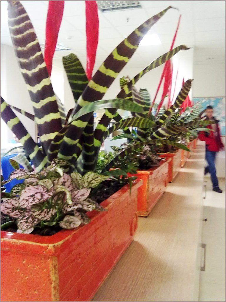 HORTUS-MAGICUS-fitodizaino-sprendimai-vazonai-pagal-specialų-užsakymą.-Poted-plants